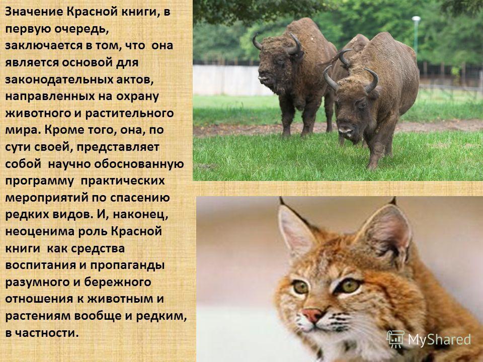 Значение Красной книги, в первую очередь, заключается в том, что она является основой для законодательных актов, направленных на охрану животного и растительного мира. Кроме того, она, по сути своей, представляет собой научно обоснованную программу п