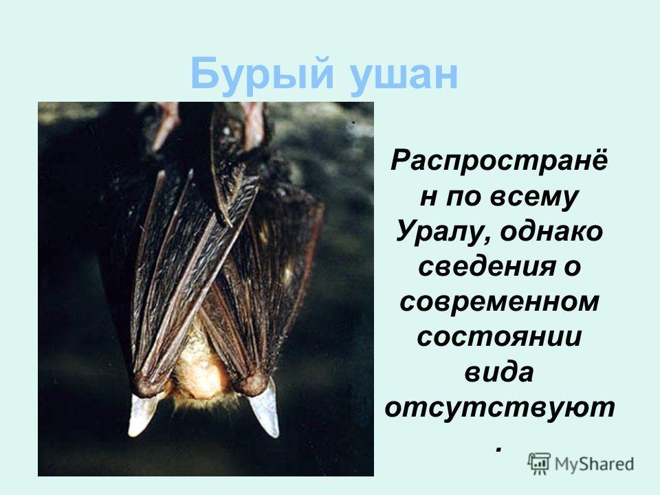 Бурый ушан Распространё н по всему Уралу, однако сведения о современном состоянии вида отсутствуют.