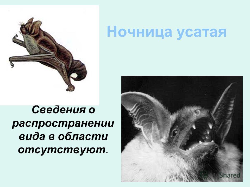 Ночница усатая Сведения о распространении вида в области отсутствуют.