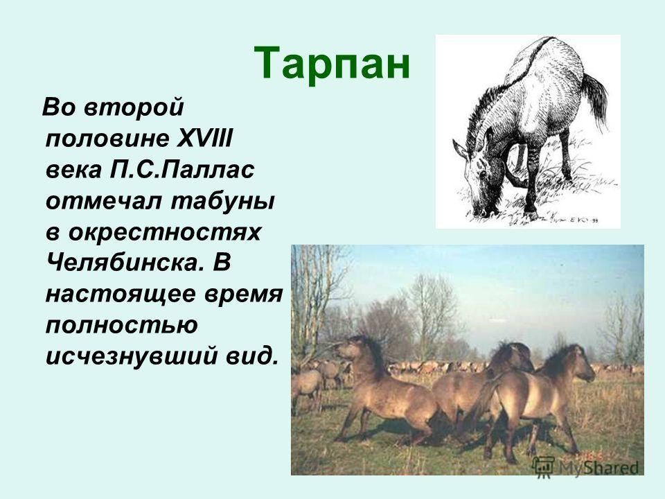Тарпан Во второй половине XVIII века П.С.Паллас отмечал табуны в окрестностях Челябинска. В настоящее время полностью исчезнувший вид.