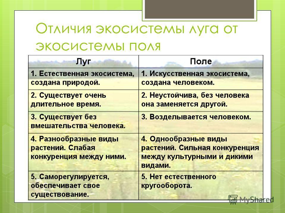Отличия экосистемы луга от экосистемы поля