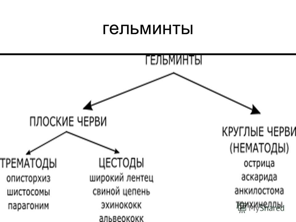 гельминты