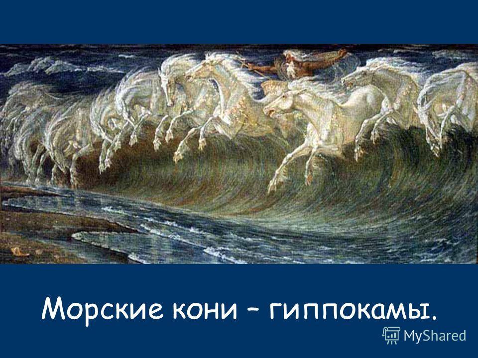 Морские кони – гиппокампы.