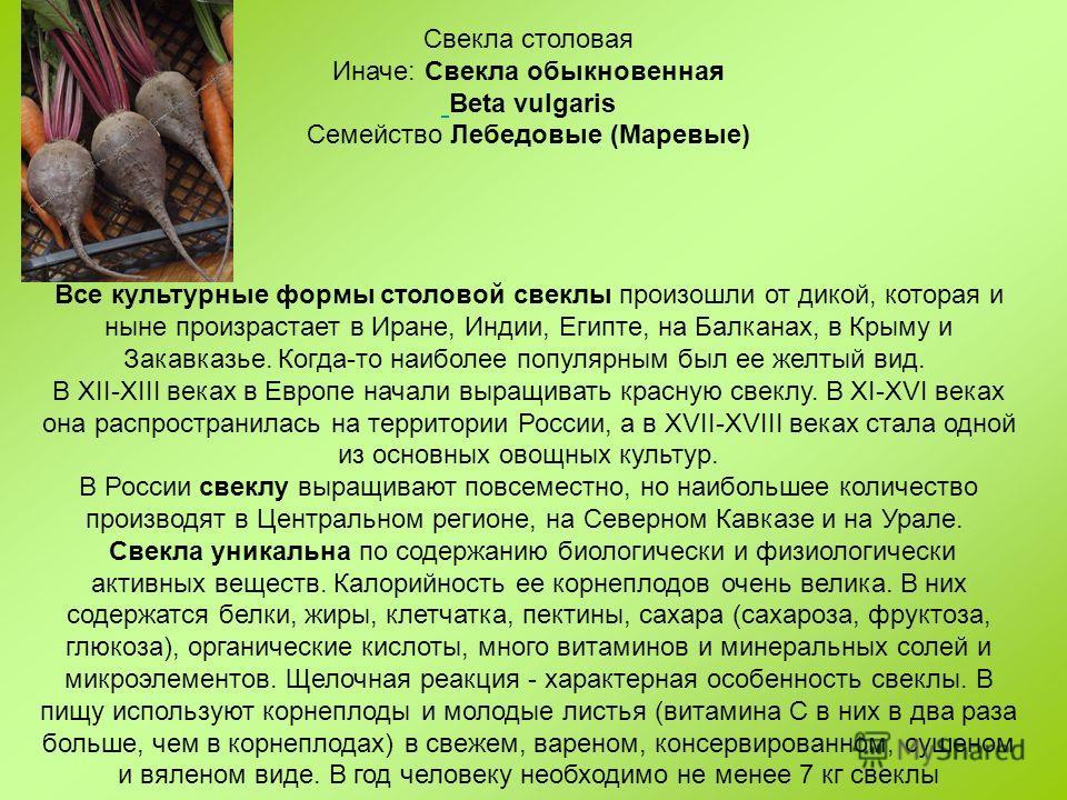 Свекла столовая Иначе: Свекла обыкновенная Beta vulgaris Семейство Лебедовые (Маревые) Все культурные формы столовой свеклы произошли от дикой, которая и ныне произрастает в Иране, Индии, Египте, на Балканах, в Крыму и Закавказье. Когда-то наиболее п