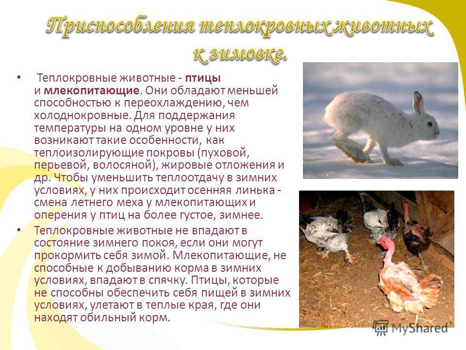 Теплокровные животные - птицы и млекопитающие. Они обладают меньшей способностью к переохлаждению, чем холоднокровные. Для поддержания температуры на одном уровне у них возникают такие особенности, как теплоизолирующие покровы (пуховой, перьевой, вол