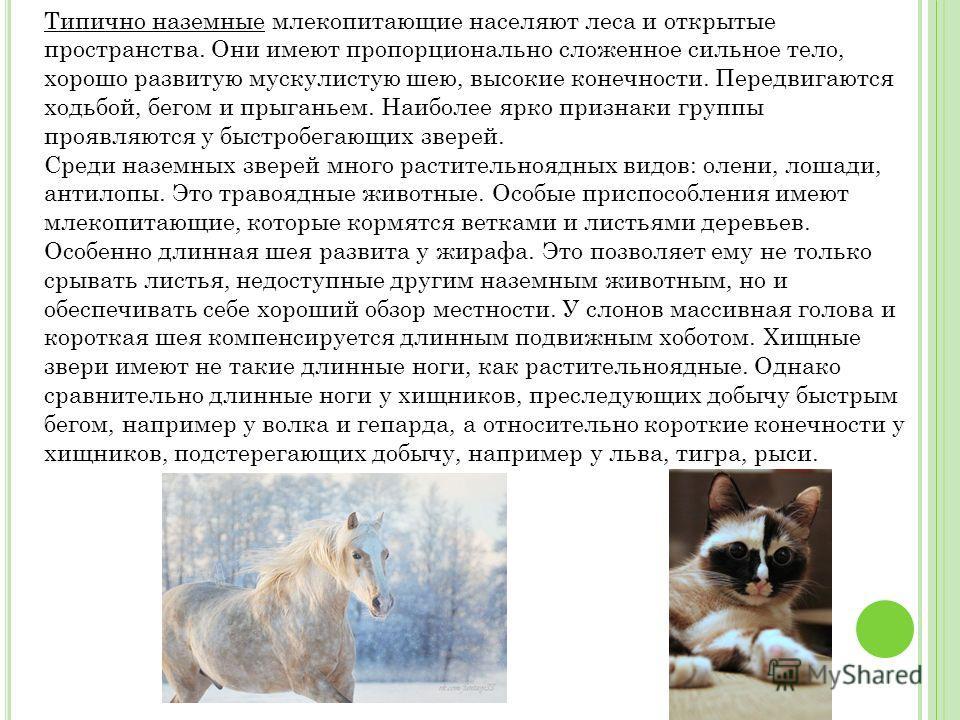 Типично наземные млекопитающие населяют леса и открытые пространства. Они имеют пропорционально сложенное сильное тело, хорошо развитую мускулистую шею, высокие конечности. Передвигаются ходьбой, бегом и прыганьем. Наиболее ярко признаки группы прояв