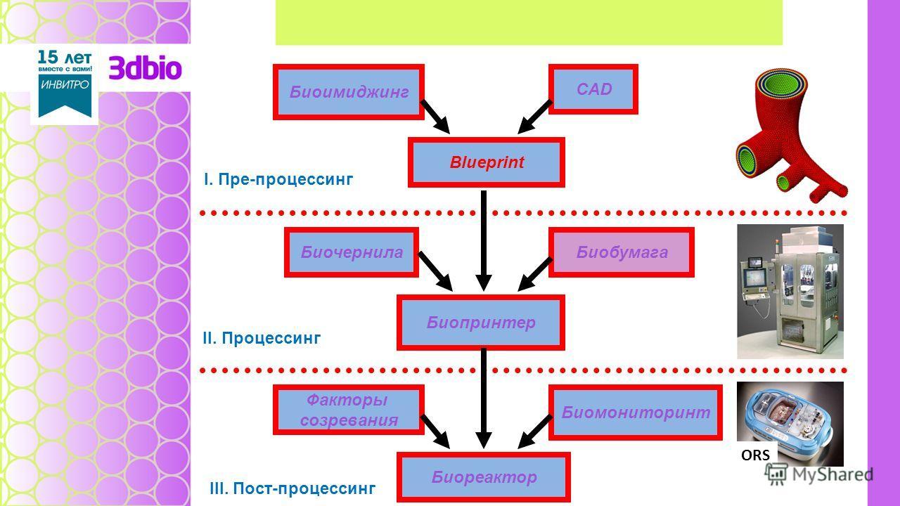 Биоимиджинг Blueprint CAD Биочернила Биопринтер Биобумага Факторы созревания Биореактор Биомониторинт I. Пре-процессинг II. Процессинг III. Пост-проце