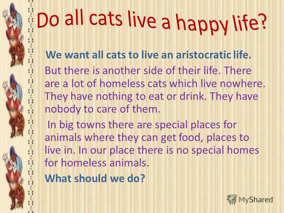 We want all cats to live an aristocratic life. But there is another side of their life. There are a lot of homeless cats which live nowhere. They have nothing to eat or drink. They have nobody to care of them. In big towns there are special places fo