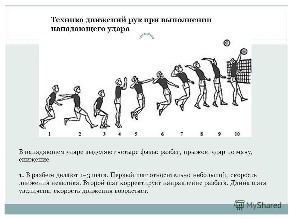 Техника движений рук при выполнении нападающего удара В нападающем ударе выделяют четыре фазы: разбег, прыжок, удар по мячу, снижение. 1. В разбеге делают 1–3 шага. Первый шаг относительно небольшой, скорость движения невелика. Второй шаг корректируе