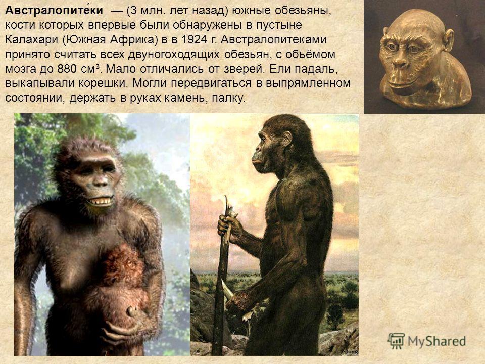 Австралопите́ки (3 млн. лет назад) южные обезьяны, кости которых впервые были обнаружены в пустыне Калахари (Южная Африка) в в 1924 г. Австралопитеками принято считать всех двуногоходящих обезьян, с обьёмом мозга до 880 см³. Мало отличались от зверей