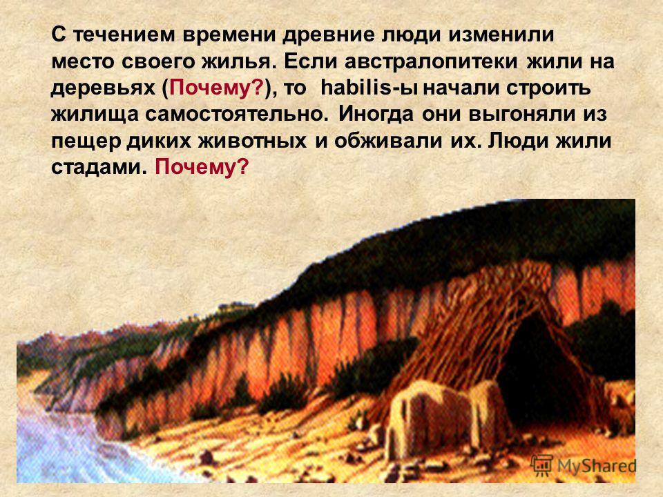 С течением времени древние люди изменили место своего жилья. Если австралопитеки жили на деревьях (Почему?), то habilis-ы начали строить жилища самостоятельно. Иногда они выгоняли из пещер диких животных и обживали их. Люди жили стадами. Почему?