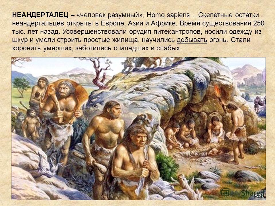 НЕАНДЕРТАЛЕЦ – «человек разумный», Homo sapiens. Скелетные остатки неандертальцев открыты в Европе, Азии и Африке. Время существования 250 тыс. лет назад. Усовершенствовали орудия питекантропов, носили одежду из шкур и умели строить простые жилища, н