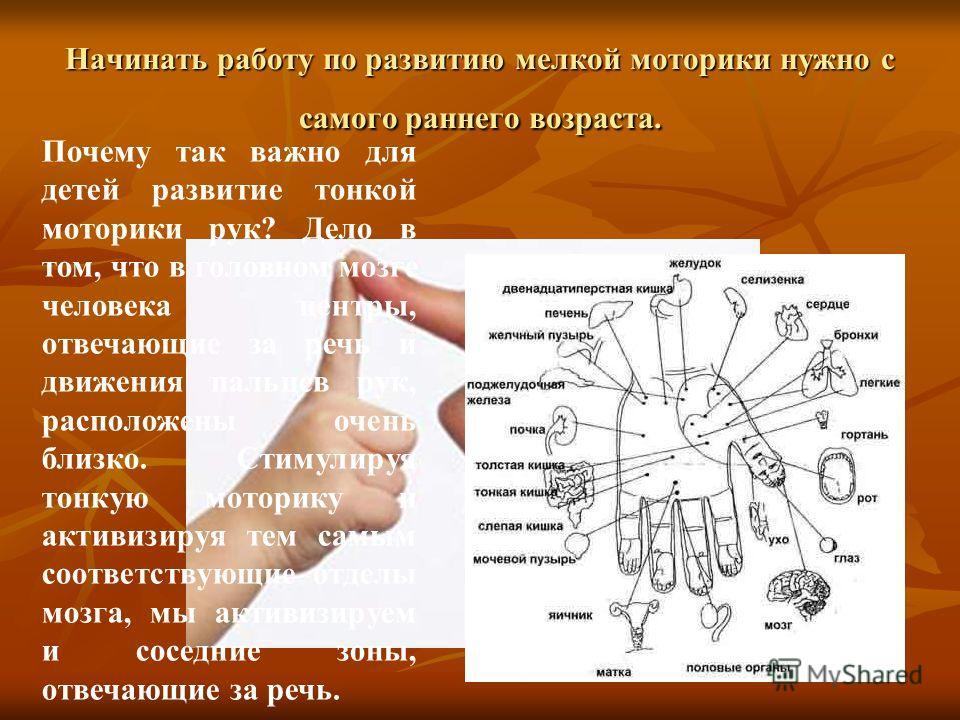 Начинать работу по развитию мелкой моторики нужно с самого раннего возраста. Почему так важно для детей развитие тонкой моторики рук? Дело в том, что в головном мозге человека центры, отвечающие за речь и движения пальцев рук, расположены очень близк