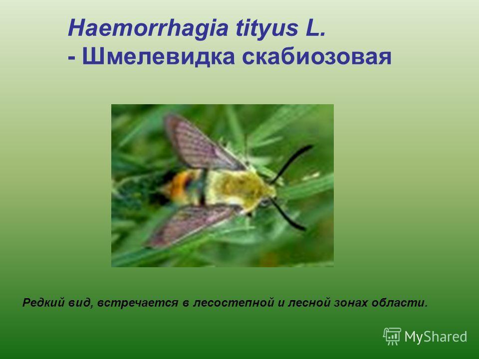 Редкий вид, встречается в лесостепной и лесной зонах области. Haemorrhagia tityus L. - Шмелевидка скабиозовая