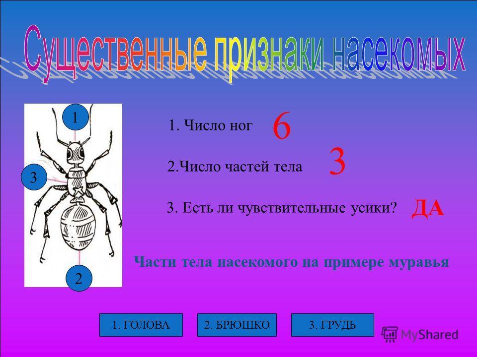 1 3 2 1. Число ног 2. Число частей тела 3. Есть ли чувствительные усики? Части тела насекомого на примере муравья 3. ГРУДЬ2. БРЮШКО1. ГОЛОВА 6 3 ДА