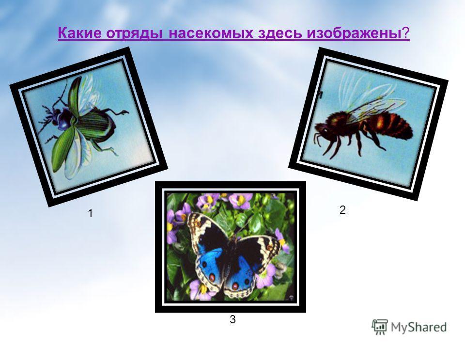 Какие отряды насекомых здесь изображены? 2. 2 3 1