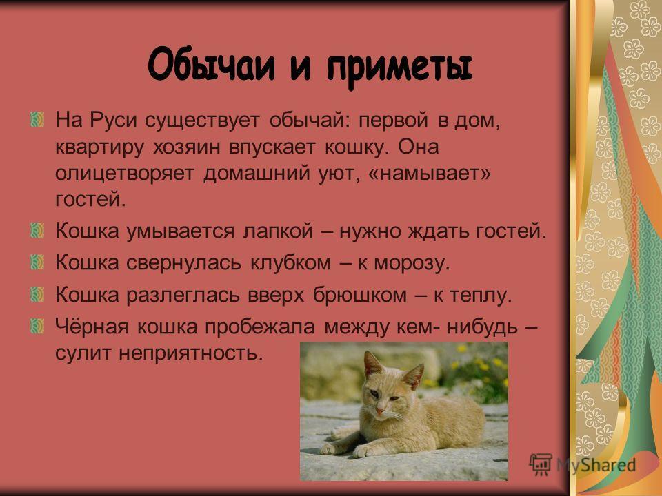 На Руси существует обычай: первой в дом, квартиру хозяин впускает кошку. Она олицетворяет домашний уют, «намывает» гостей. Кошка умывается лапкой – нужно ждать гостей. Кошка свернулась клубком – к морозу. Кошка разлеглась вверх брюшком – к теплу. Чёр