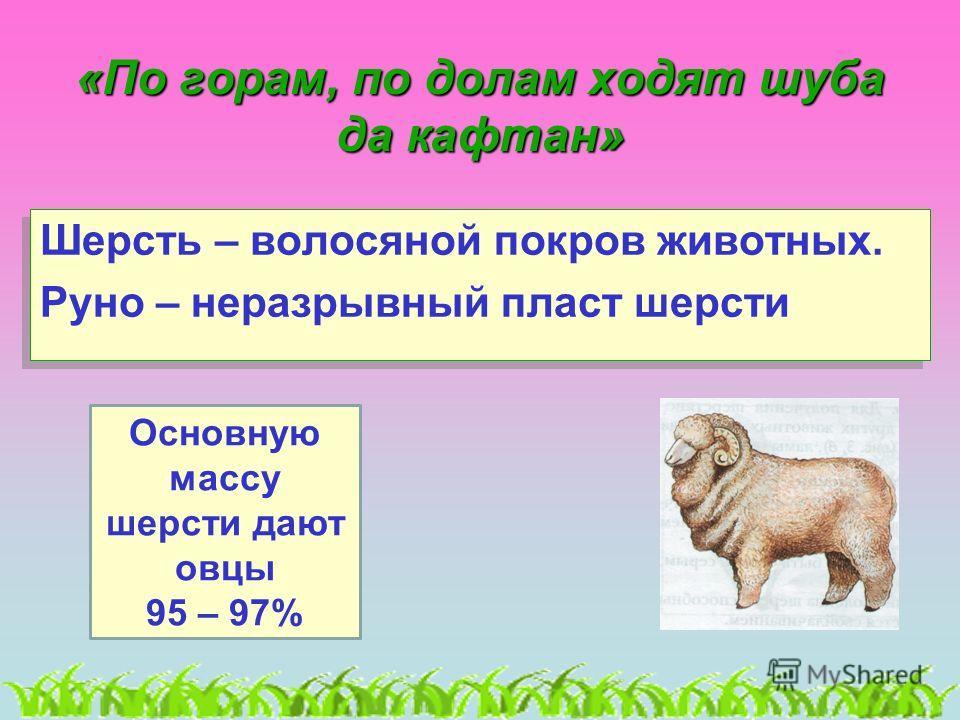 «По горам, по долам ходят шуба да кафтан» Шерсть – волосяной покров животных. Руно – неразрывный пласт шерсти Шерсть – волосяной покров животных. Руно – неразрывный пласт шерсти Основную массу шерсти дают овцы 95 – 97%