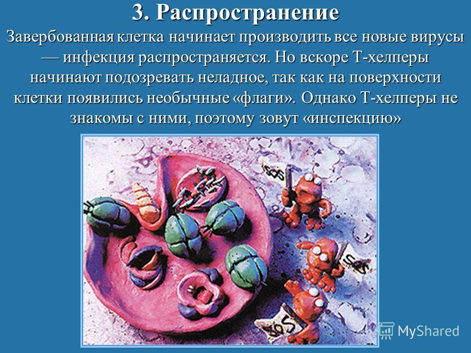 3. Распространение Завербованная клетка начинает производить все новые вирусы инфекция распространяется. Но вскоре Т-хелперы начинают подозревать неладное, так как на поверхности клетки появились необычные «флаги». Однако Т-хелперы не знакомы с ними,