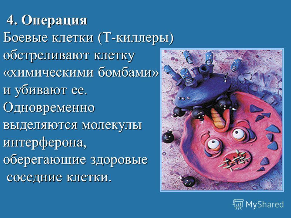 4. Операция Боевые клетки (Т-киллеры) обстреливают клетку «химическими бомбами» и убивают ее. Одновременно выделяются молекулы интерферона, оберегающие здоровые соседние клетки.