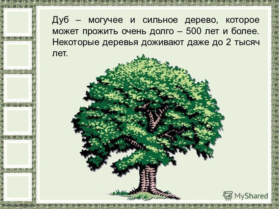FokinaLida.75@mail.ru Дуб – могучее и сильное дерево, которое может прожить очень долго – 500 лет и более. Некоторые деревья доживают даже до 2 тысяч лет.