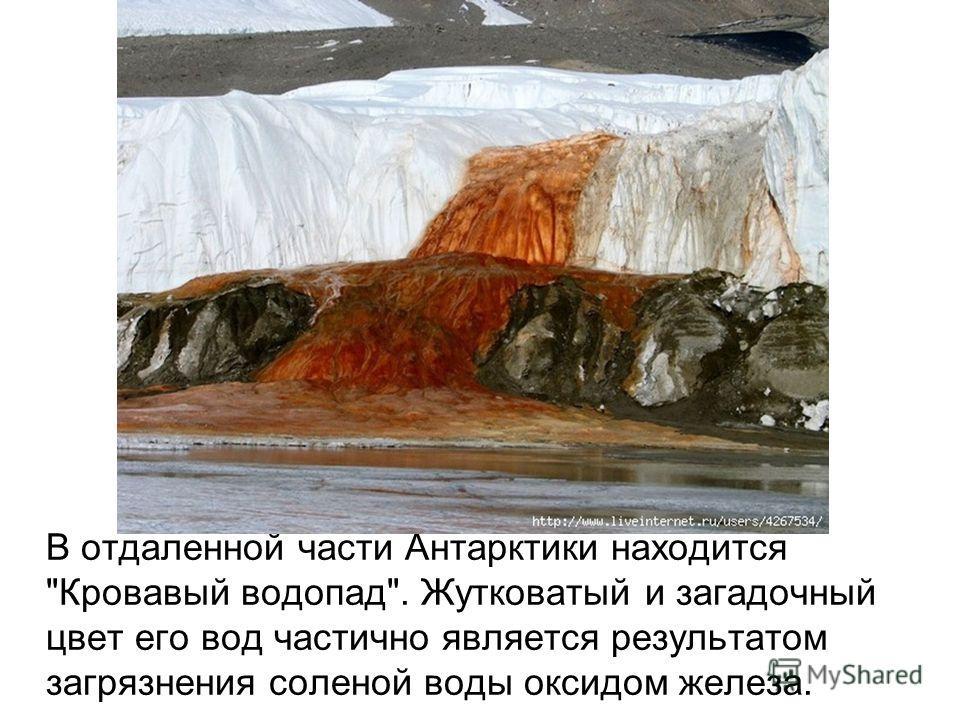 В отдаленной части Антарктики находится Кровавый водопад. Жутковатый и загадочный цвет его вод частично является результатом загрязнения соленой воды оксидом железа.