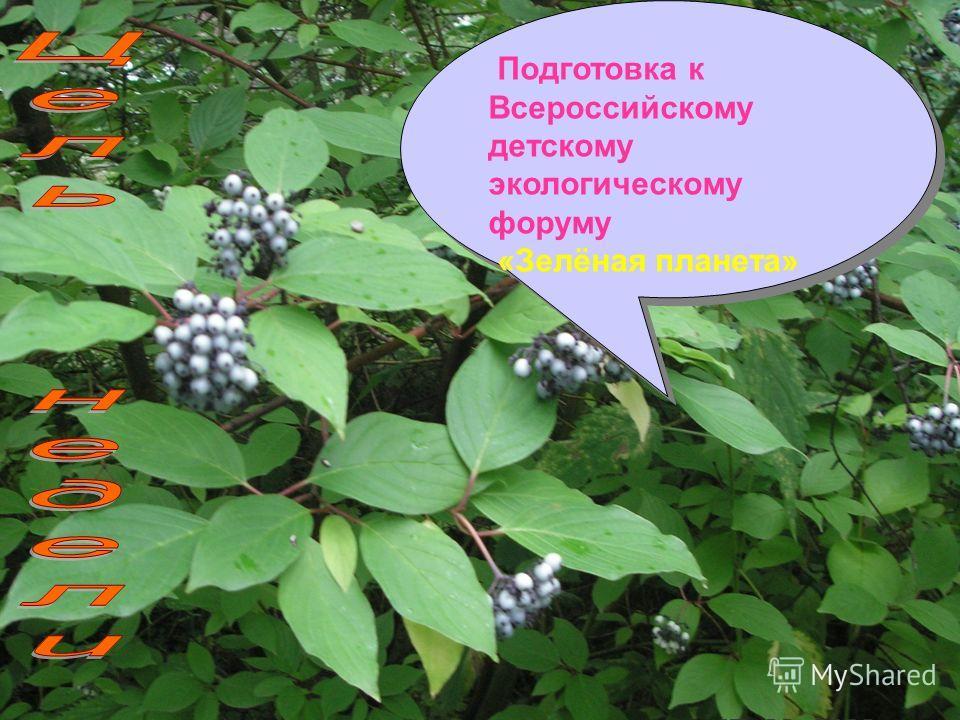 Подготовка к Всероссийскому детскому экологическому форуму «Зелёная планета» Подготовка к Всероссийскому детскому экологическому форуму «Зелёная планета»