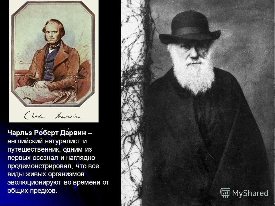 Чарльз Ро́берт Да́рвин – английский натуралист и путешественник, одним из первых осознал и наглядно продемонстрировал, что все виды живых организмов эволюционируют во времени от общих предков.