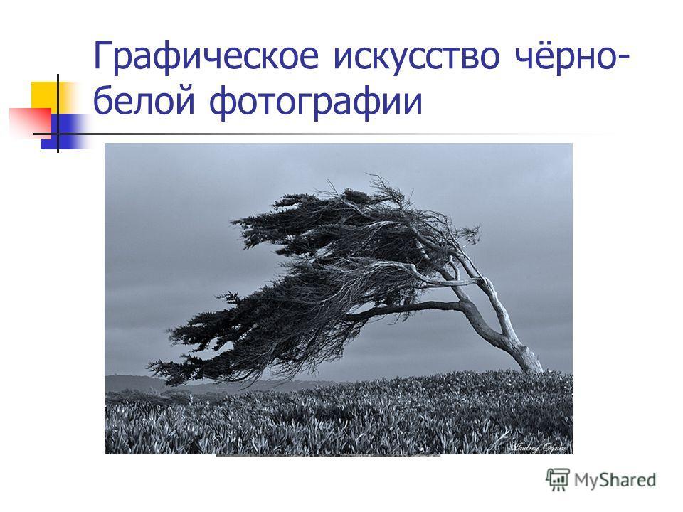 Графическое искусство чёрно- белой фотографии