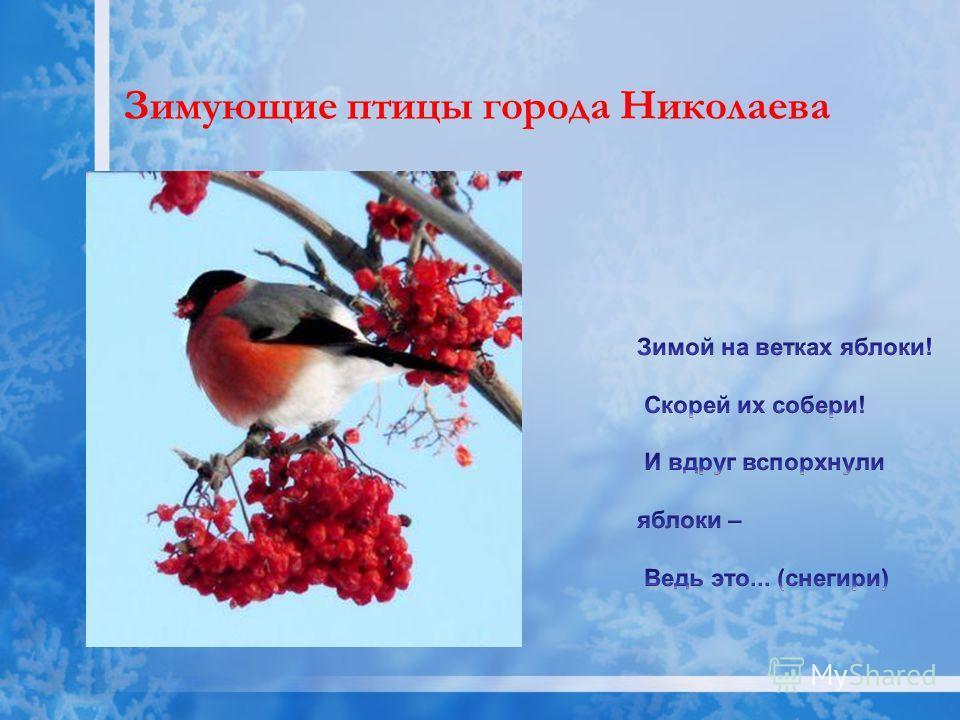 Зимующие птицы города Николаева