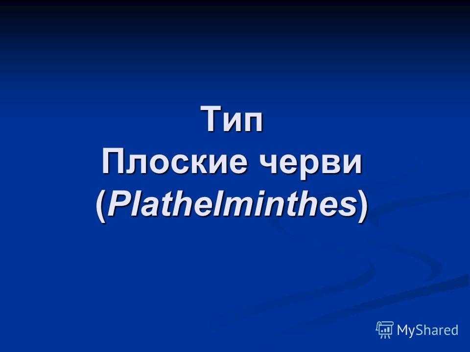Тип Плоские черви (Plathelminthes)