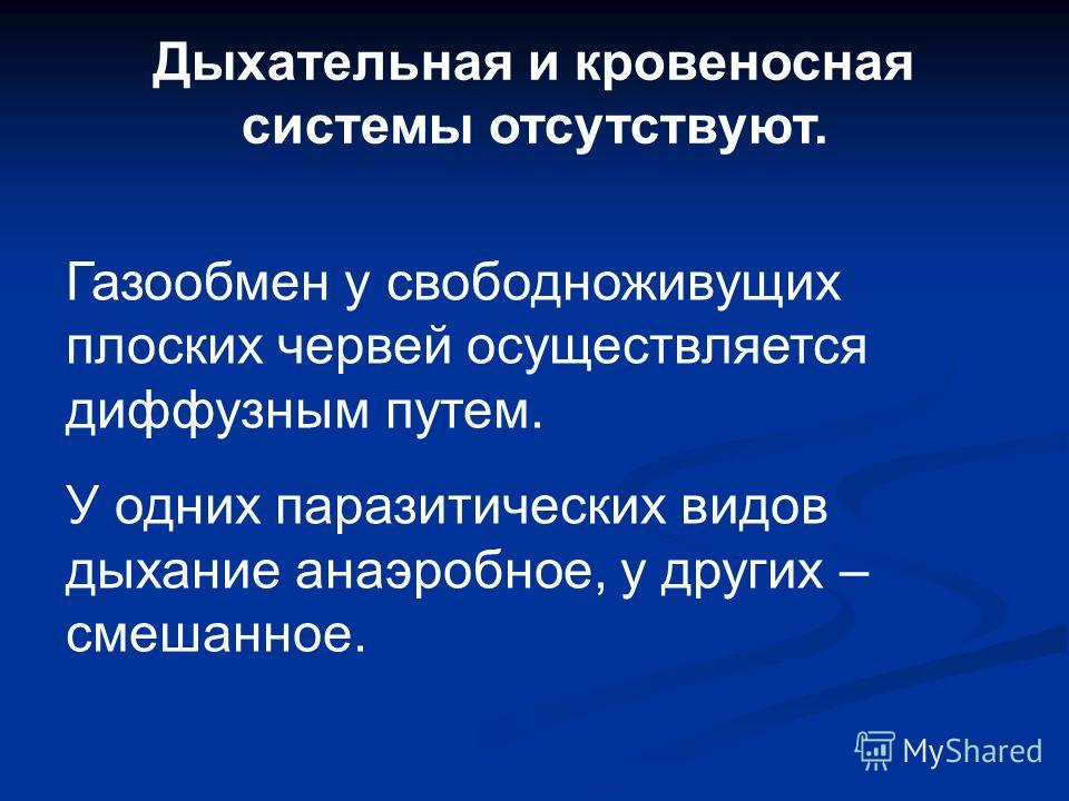 Plathelminthes систематика плоских червей