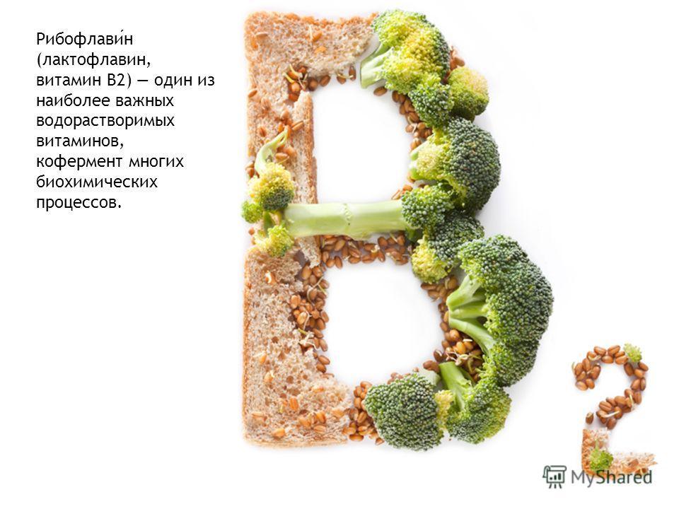 Рибофлавин (лактофлавин, витамин B2) один из наиболее важных водорастворимых витаминов, кофермент многих биохимических процессов.