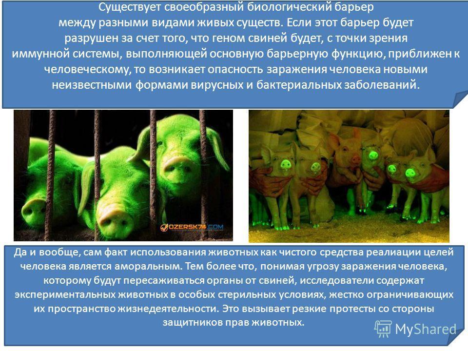 Да и вообще, сам факт использования животных как чистого средства реализации целей человека является аморальным. Тем более что, понимая угрозу заражения человека, которому будут пересаживаться органы от свиней, исследователи содержат экспериментальны