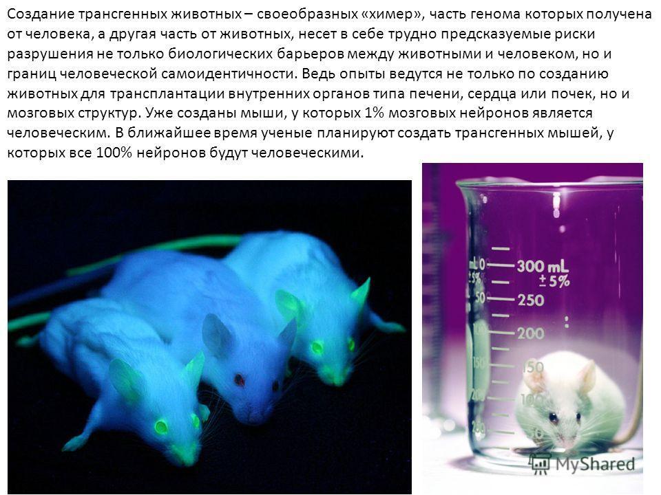Создание трансгенных животных – своеобразных «химер», часть генома которых получена от человека, а другая часть от животных, несет в себе трудно предсказуемые риски разрушения не только биологических барьеров между животными и человеком, но и границ