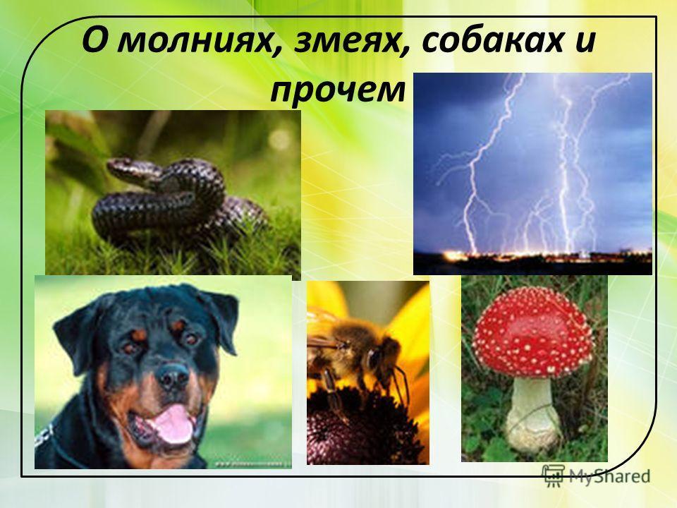 О молниях, змеях, собаках и прочем