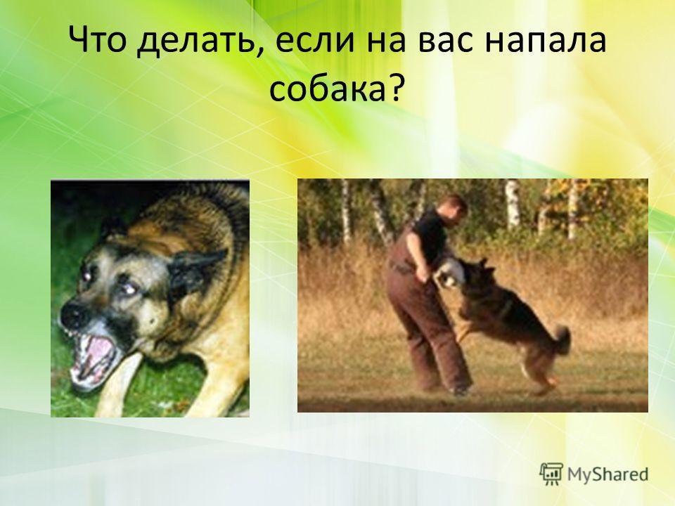 Что делать, если на вас напала собака?