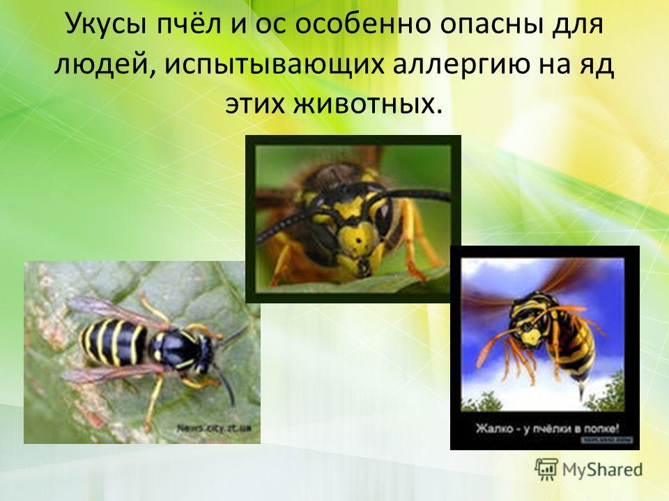 Укусы пчёл и ос особенно опасны для людей, испытывающих аллергию на яд этих животных.
