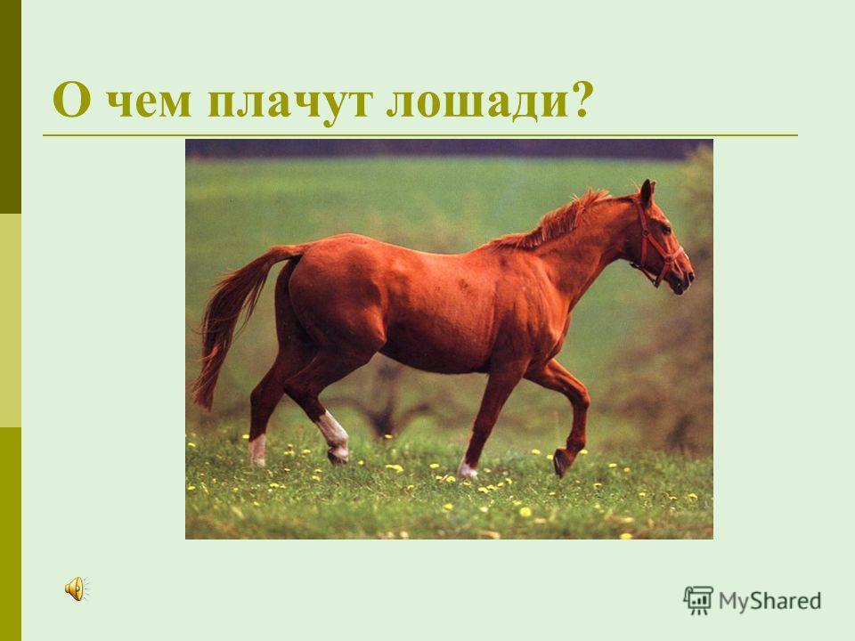 рассказ абрамова о чем плачут лошади читать онлайн