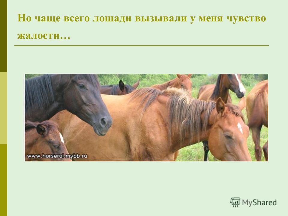 Но чаще всего лошади вызывали у меня чувство жалости…
