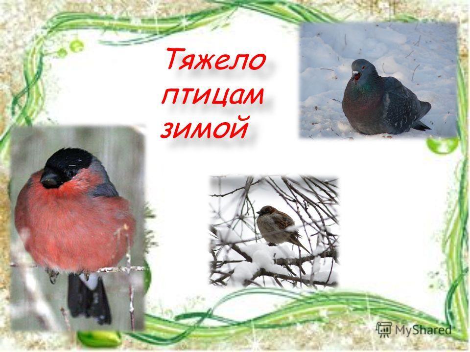 Тяжело птицам зимой