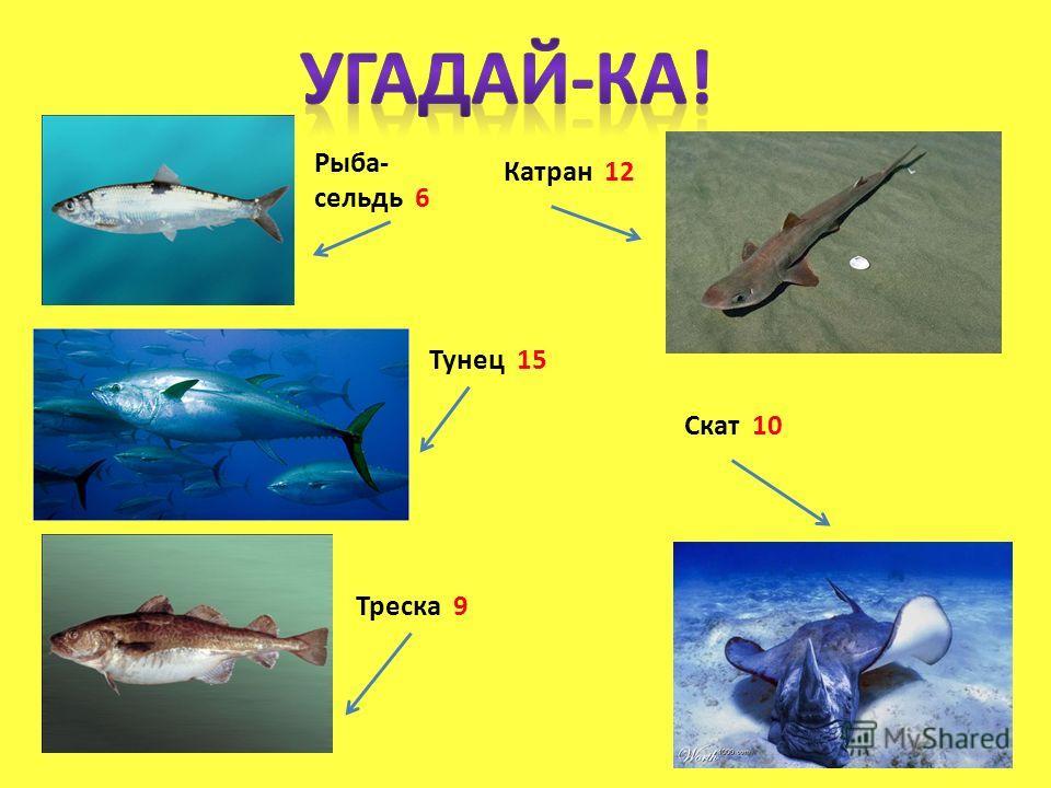 Рыба- сельдь 6 Катран 12 Треска 9 Тунец 15 Скат 10