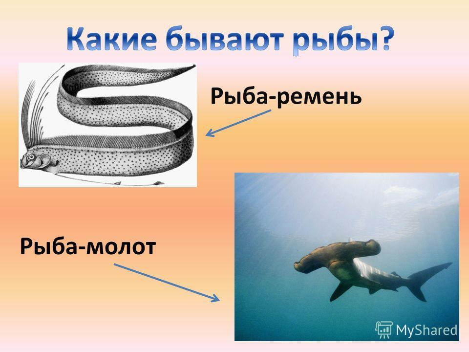 Рыба-ремень Рыба-молот