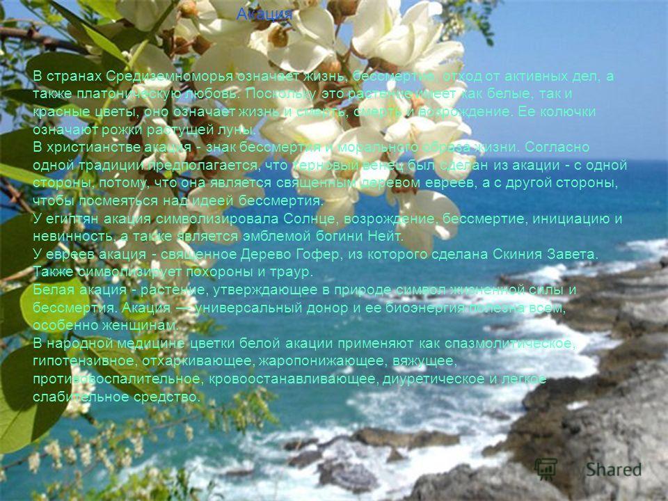 Слайд заставка Акация В странах Средиземноморья означает жизнь, бессмертие, отход от активных дел, а также платоническую любовь. Поскольку это растение имеет как белые, так и красные цветы, оно означает жизнь и смерть, смерть и возрождение. Ее колючк