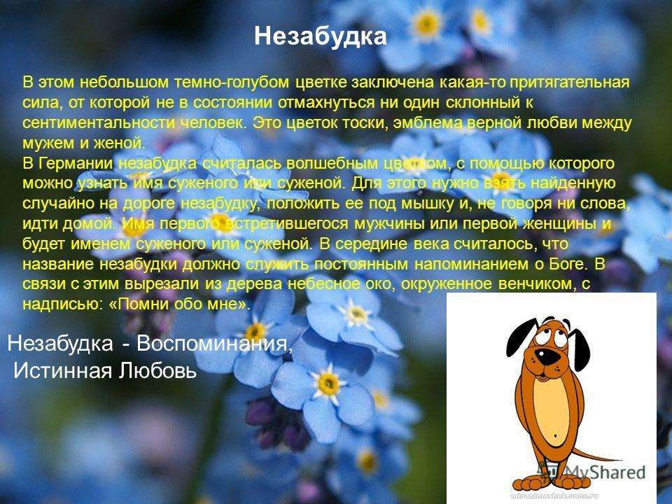 Незабудка В этом небольшом темно-голубом цветке заключена какая-то притягательная сила, от которой не в состоянии отмахнуться ни один склонный к сентиментальности человек. Это цветок тоски, эмблема верной любви между мужем и женой. В Германии незабуд