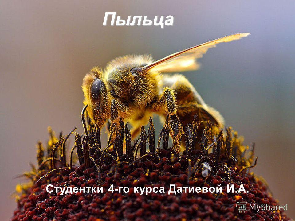 Пыльца Студентки 4-го курса Датиевой И.А.