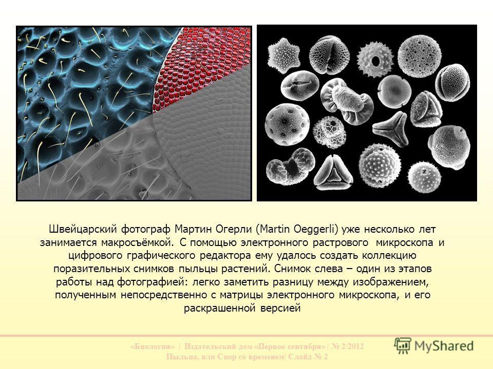 «Биология» | Издательский дом «Первое сентября» | 2/2012 Пыльца, или Спор со временем| Слайд 2 Швейцарский фотограф Мартин Огерли (Martin Oeggerli) уже несколько лет занимается макросъёмкой. С помощью электронного растрового микроскопа и цифрового гр