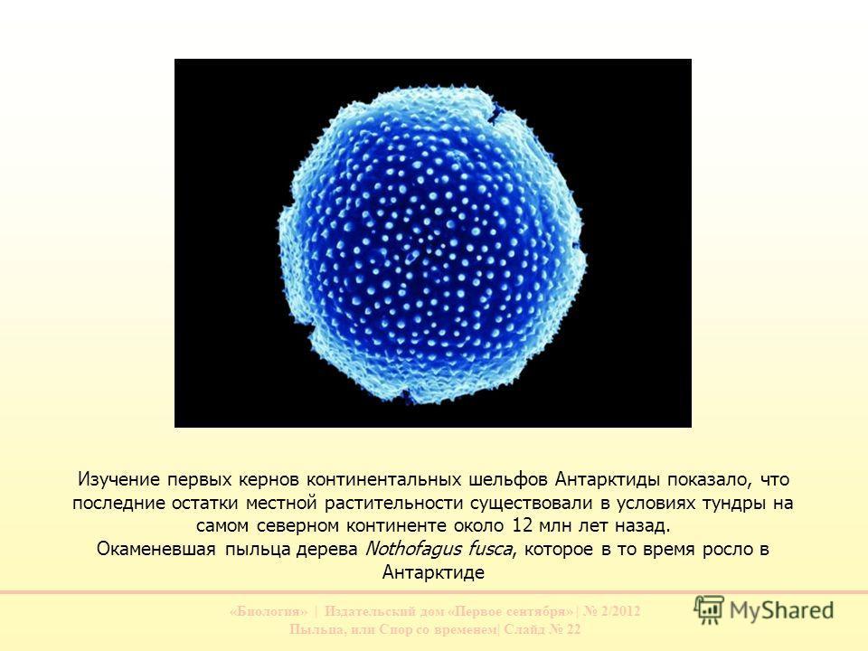 «Биология» | Издательский дом «Первое сентября» | 2/2012 Пыльца, или Спор со временем| Слайд 22 Изучение первых кернов континентальных шельфов Антарктиды показало, что последние остатки местной растительности существовали в условиях тундры на самом с