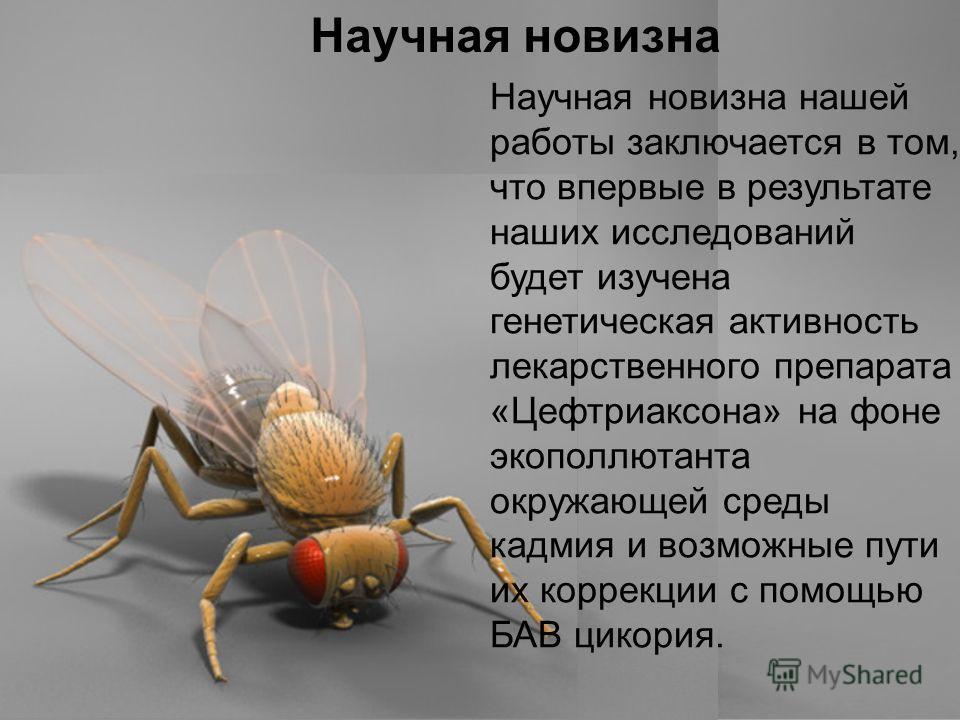 Домащенко А.Н. Научная новизна Научная новизна нашей работы заключается в том, что впервые в результате наших исследований будет изучена генетическая активность лекарственного препарата «Цефтриаксона» на фоне экополлютанта окружающей среды кадмия и в