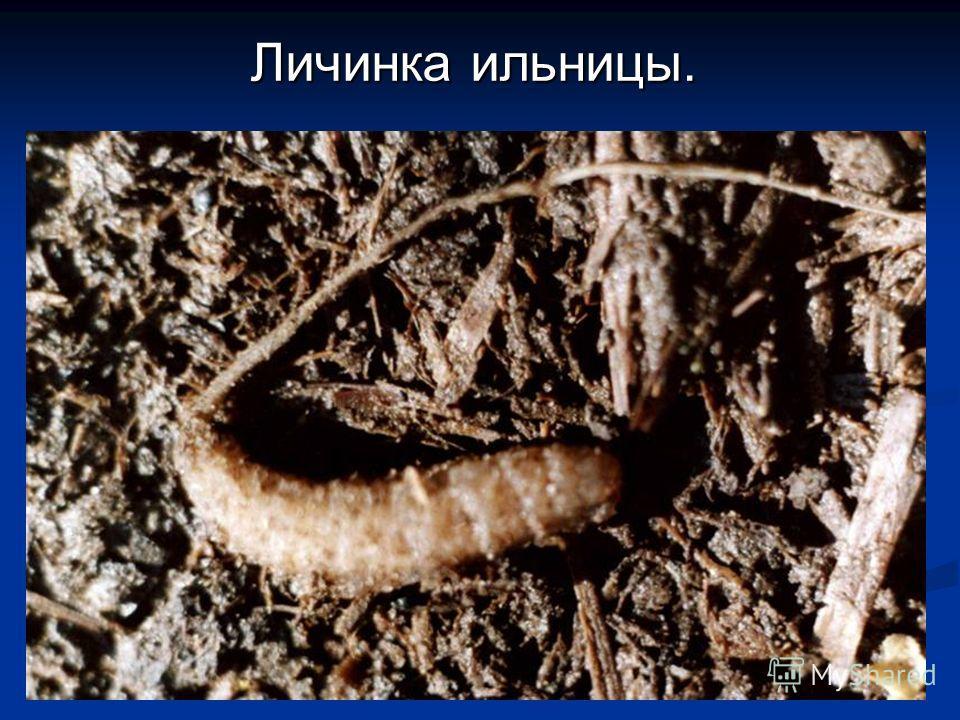 желудочные паразиты человека